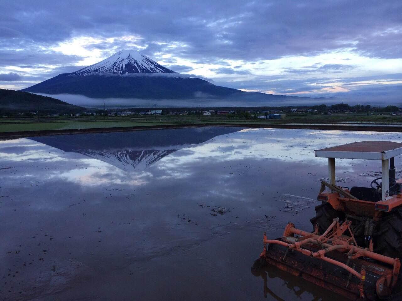 本来はこの絶景!田んぼに逆富士です。